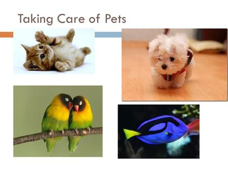 Taking Care of Pets. Being A Good Citizen  What are good character behavior skills?  What character skills apply to caring for animals?