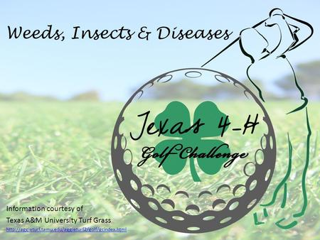 Weeds, Insects & Diseases Information courtesy of Texas A&M University Turf Grass