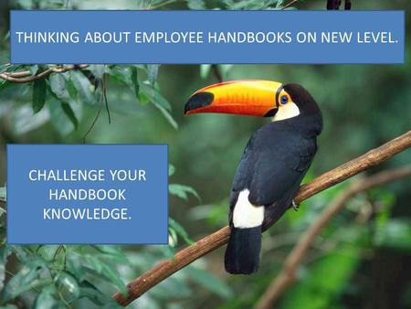 EMPLOYEE HANDBOOKS TEN COMMON MISTAKES Presented by Cathy A. Pilkington Law Offices of Cathy A. Pilkington 160 N Clark Street, Suite 4700 Chicago, IL 60601.