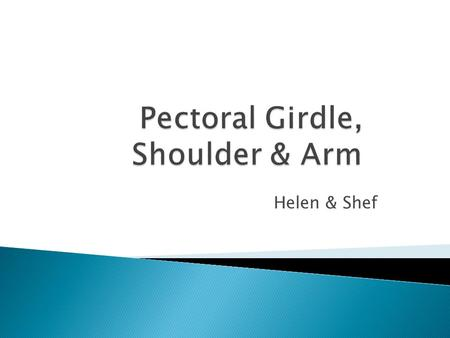 Helen & Shef. Acromion Coracoid process Lesser tubercle Intertubercular (bicipital) groove (What structure runs through here?) Greater tubercle What structure.
