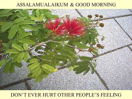 ASSALAMUALAIKUM & GOOD MORNING DON'T EVER HURT OTHER PEOPLE'S FEELING.