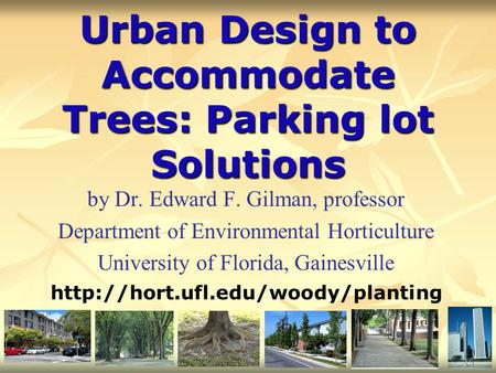 Urban Design to Accommodate Trees: Parking lot Solutions by Dr. Edward F. Gilman, professor Department of Environmental Horticulture University of Florida,