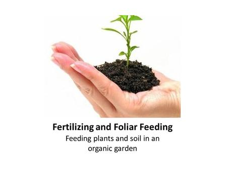 Fertilizing and Foliar Feeding Feeding plants and soil in an organic garden.