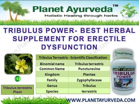 TRIBULUS POWER- BEST HERBAL SUPPLEMENT FOR ERECTILE DYSFUNCTION