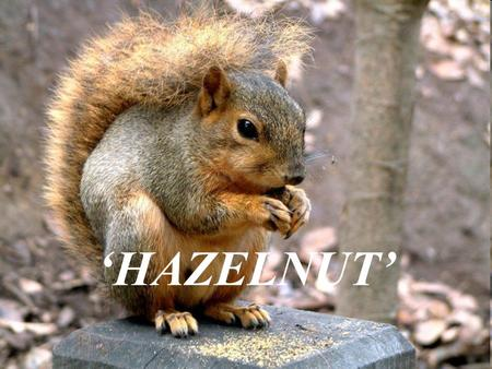 'HAZELNUT'. Why hazelnut? Important source of a large number of family farms Makes up 71% of world product 20% of total agricultural exports In 1950's,