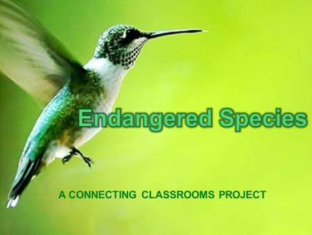 A CONNECTING CLASSROOMS PROJECT. To maintain ecological 'balance of nature' and maintain food chain and nature cycles. It has economic value. Many wild.