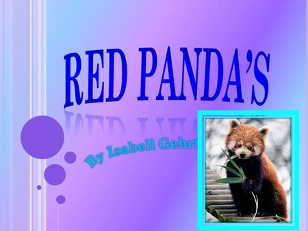 W HY I C HOSE T HIS I chose Red Panda's because they are a cool animal. I also chose them because they are very interesting and I thought it would be.