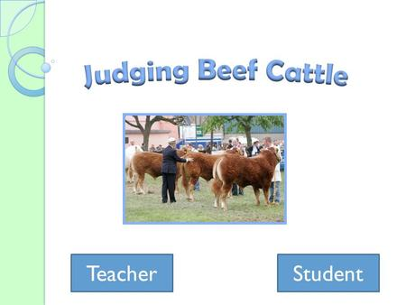 TeacherStudent. Teacher's Page Learning Objectives ◦ Given two pictures of different cattle, students will be able to determine which one has more muscling.