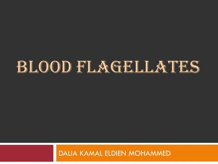 BLOOD FLAGELLATES DALIA KAMAL ELDIEN MOHAMMED. Introduction The family Trypanosomatidae (include hemoflagellates), contain only two genera that parasitize.