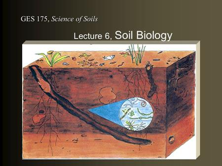 GES 175, Science of Soils Lecture 6, Soil Biology.