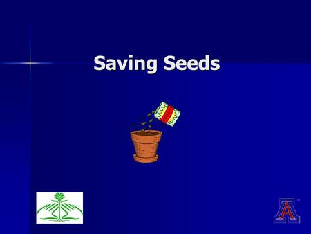 Saving Seeds. Seed Saving Hybrid vs. heirloom seeds Hybrid vs. heirloom seeds Isolating plants Isolating plants Methods for cleaning and storing Methods.