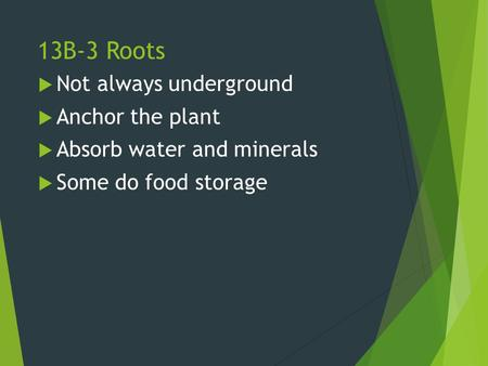 13B-3 Roots Not always underground Anchor the plant