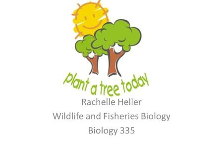 Rachelle Heller Wildlife and Fisheries Biology Biology 335.