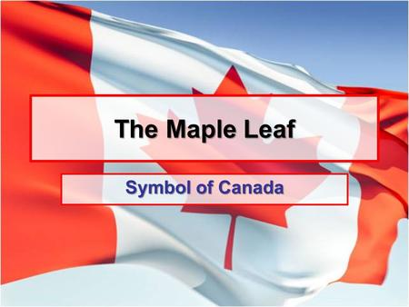 The Maple Leaf Symbol of Canada.