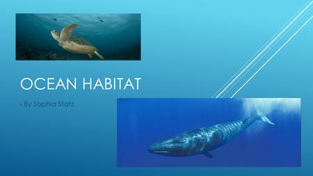 OCEAN HABITAT - By Sophia Statz. The ocean is home to billions of animals. These animals need to adapt to their habitat. The animals are hurt in the ocean.