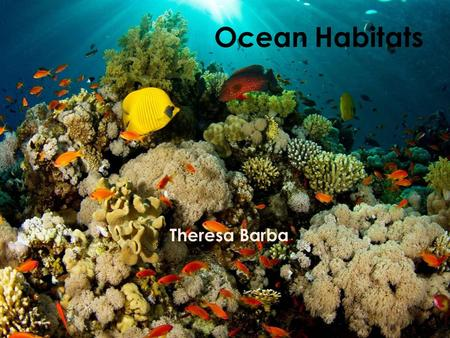 Ocean Habitats Theresa Barba Oceans Today's Objective: – I can identify the Ocean as a habitat and will be able to describe it's characteristics. Around.