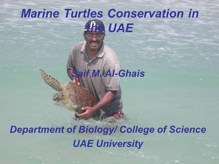 Marine Turtles Conservation in the UAE Saif M. Al-Ghais Department of Biology/ College of Science UAE University.