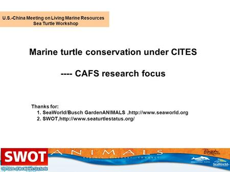 Marine turtle conservation under CITES ---- CAFS research focus Thanks for: 1. SeaWorld/Busch GardenANIMALS,http://www.seaworld.org 2. SWOT,http://www.seaturtlestatus.org/
