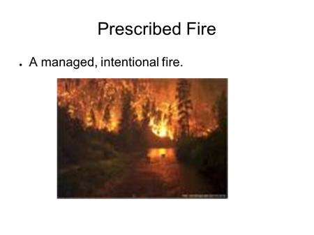 Prescribed Fire ● A managed, intentional fire.. 8 main purposes: ● Removes fuel from the floor ● Gets sites ready for seeding and planting ● Improves.
