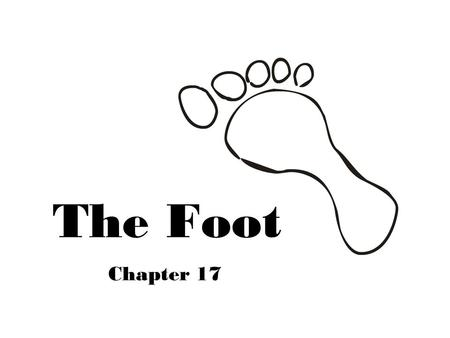 The Foot Chapter 17. Foot Anatomy  26 Bones  7 Tarsal  5 Metatarsal  14 Phalanges  38 Joints  4 Arches.