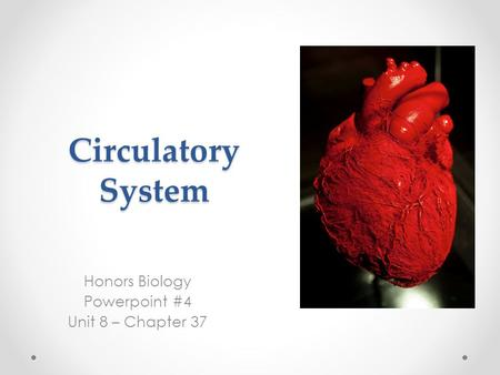Circulatory System Honors Biology Powerpoint #4 Unit 8 – Chapter 37.