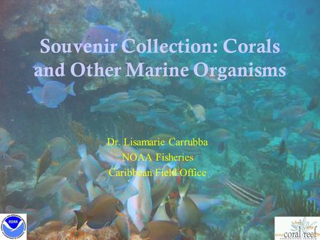 Souvenir Collection: Corals and Other Marine Organisms