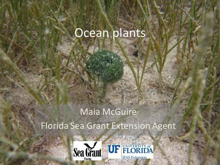 Ocean plants Maia McGuire Florida Sea Grant Extension Agent.
