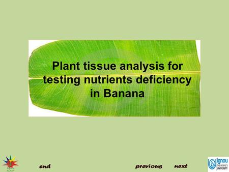 Plant tissue analysis for testing nutrients deficiency in Banana
