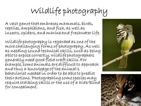 Wildlife photography A vast genre that embraces mammals, birds, reptiles, amphibians, and fish, as well as insects, spiders, and marine and freshwater.