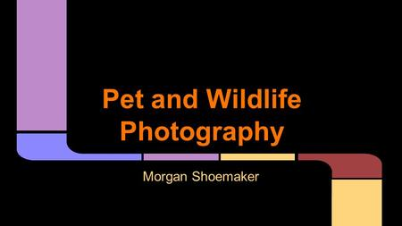 Pet and Wildlife Photography Morgan Shoemaker. Mark Holmes Photography -one day workshops and individual instruction UCSD -part of undergraduate degree.