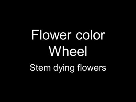 Flower color Wheel Stem dying flowers. Stem Dying flowers The process of changing the color of a fresh flower by placing the cut end of the stem into.