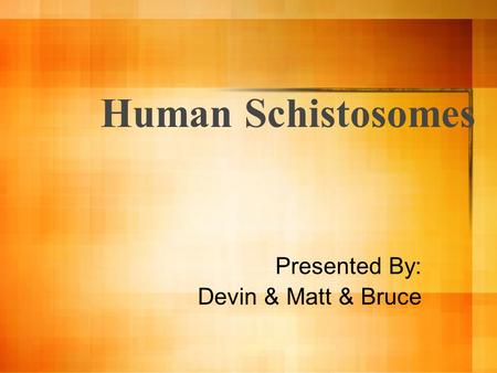 Human Schistosomes Presented By: Devin & Matt & Bruce.