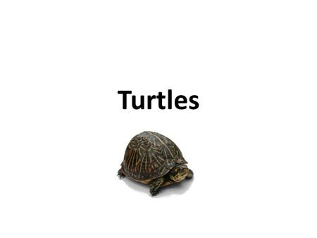 Turtles. Turtles are reptiles of the order Testudines (the crown group of the super order Chelonia), characterised by a special bony or cartilaginous.