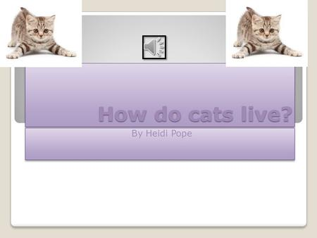 How do cats live? By Heidi Pope IntroductionIntroduction This is all about cats and how they live so cats are very cute and cuddly too!! They are very.