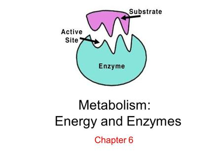 Metabolism: Energy and Enzymes Chapter 6. Energy = the ability to do work Kinetic Energy - energy of motion Potential Energy - stored energy First Law.