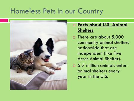 Homeless Pets in our Country  Facts about U.S. Animal Shelters  There are about 5,000 community animal shelters nationwide that are independent (like.