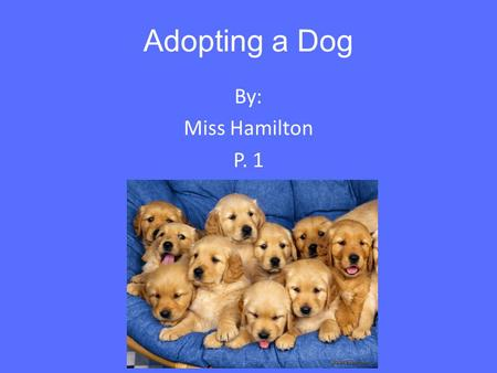 Adopting a Dog By: Miss Hamilton P. 1. What is Dog Adoption? You don't have to buy a dog to experience true bonding. Ask anybody who has adopted an adult.