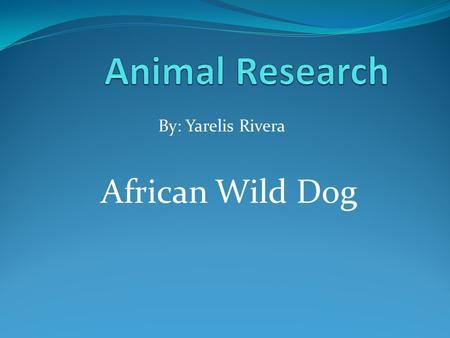 Animal Research By: Yarelis Rivera African Wild Dog.