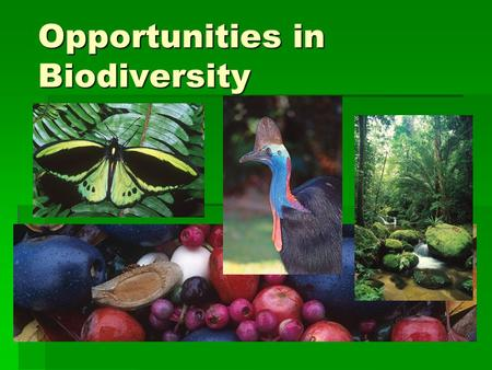 "Opportunities in Biodiversity. What is Biodiversity? ""The variety of life forms: the different plants, animals and microorganisms, the genes they contain,"