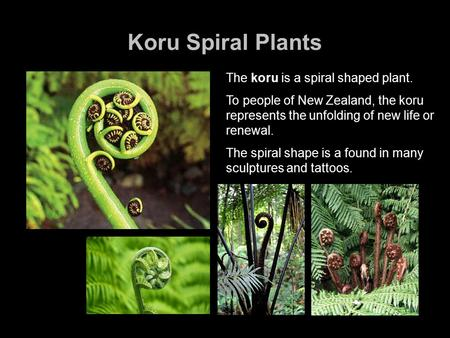 Koru Spiral Plants The koru is a spiral shaped plant. To people of New Zealand, the koru represents the unfolding of new life or renewal. The spiral shape.