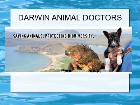 DARWIN ANIMAL DOCTORS. Started in 2010 Have treated thousands of native and non- native species Have spayed and neutered hundreds of non-native, invasive.