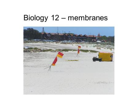 Biology 12 – membranes. Cell structures Is this eukaryotic? Why? Is this a plant or animal cell? Why? Label the structures.