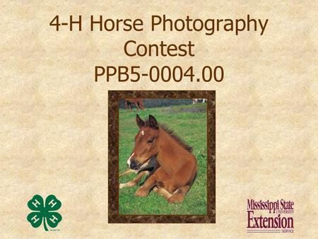 4-H Horse Photography Contest PPB5-0004.00 Presentation prepared by Kathy Nash, and Donna Schmitz, Information & Graphics Technician/ AV Reference Room.