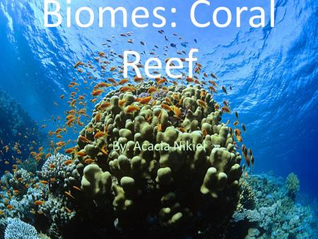 Biomes: Coral Reef By: Acacia Nikiel. THE CORAL REEF Coral reef are mostly found near the equator in the oceans. Coral Reefs hold 25 percent of the marine.