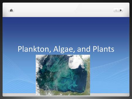 Plankton, Algae, and Plants. Plankton Plankton: the mass of mostly microscopic organisms that float or drift freely in the waters of aquatic (freshwater.