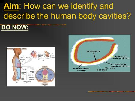 Aim: How can we identify and describe the human body cavities?