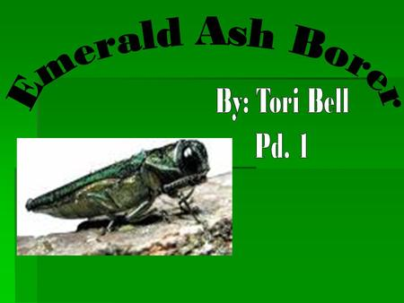 What is it? What is it?  Emerald ash borer (EAB),  Agrilus planipennis Fairmaire  Exotic beetle