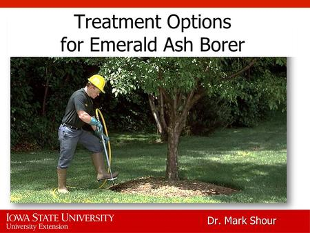 Treatment Options for Emerald Ash Borer Dr. Mark Shour.