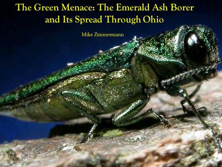 The Green Menace: The Emerald Ash Borer and Its Spread Through Ohio Mike Zimmermann.