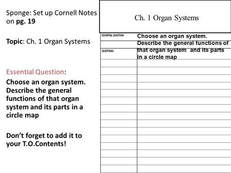 Sponge: Set up Cornell Notes on pg. 19 Topic: Ch. 1 Organ Systems Essential Question: Choose an organ system. Describe the general functions of that organ.